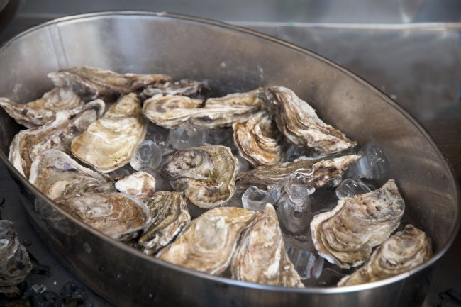 oysters can help tinnitus